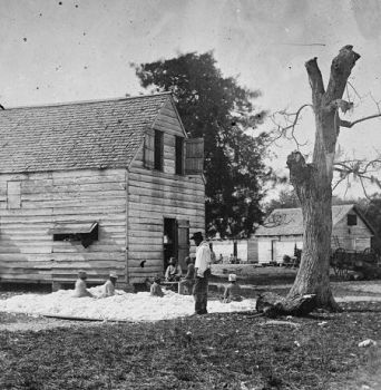 African Americans preparing cotton for gin, Port Royal, 1862